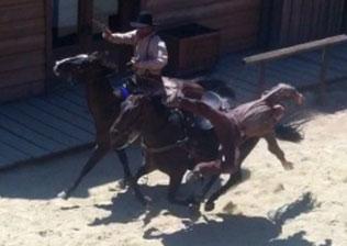 stunt horse