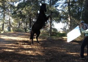 lazy-sp-livestock-stunts-04