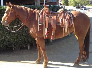 lazy-sp-props-saddles-01