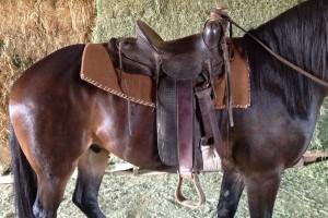 lazy-sp-props-western-saddle-03