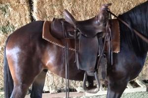 lazy-sp-western-saddle-06